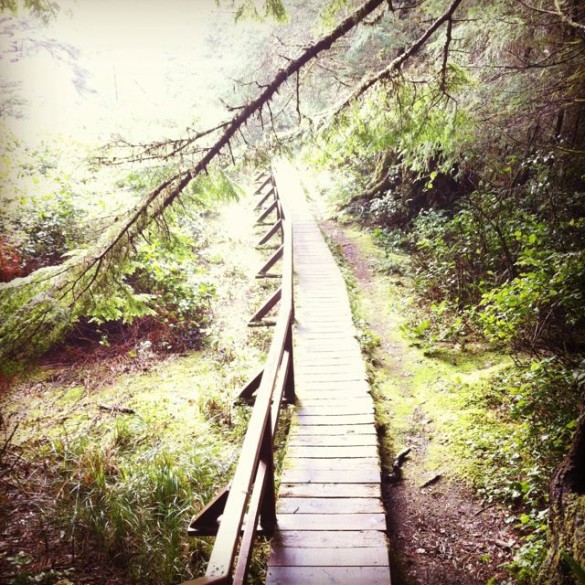 tofino path