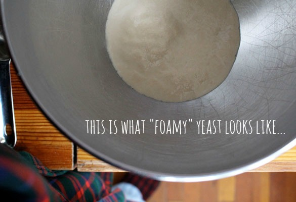 foamy-yeast
