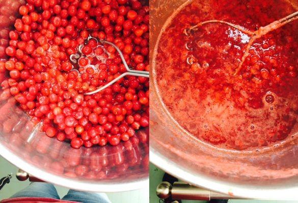 nanking jelly 1