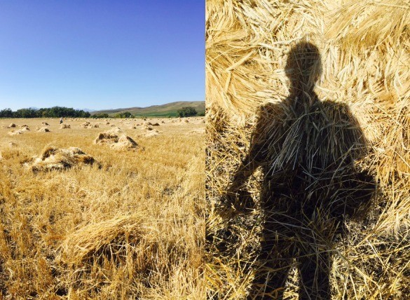 Me + barley field