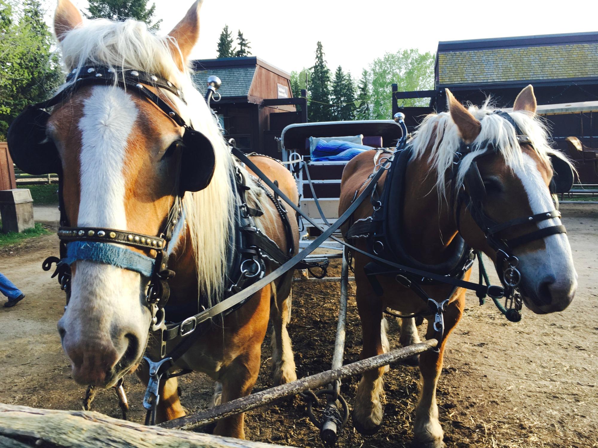 Red Deer Horses